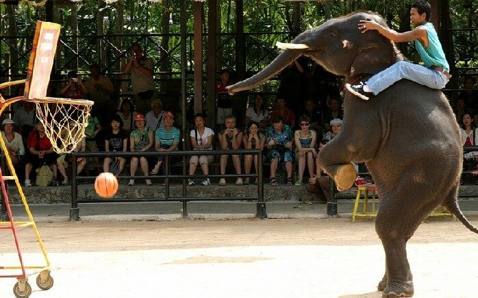 деревня слонов в паттайе