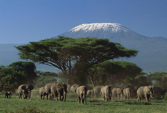 Национальный парк Найроби