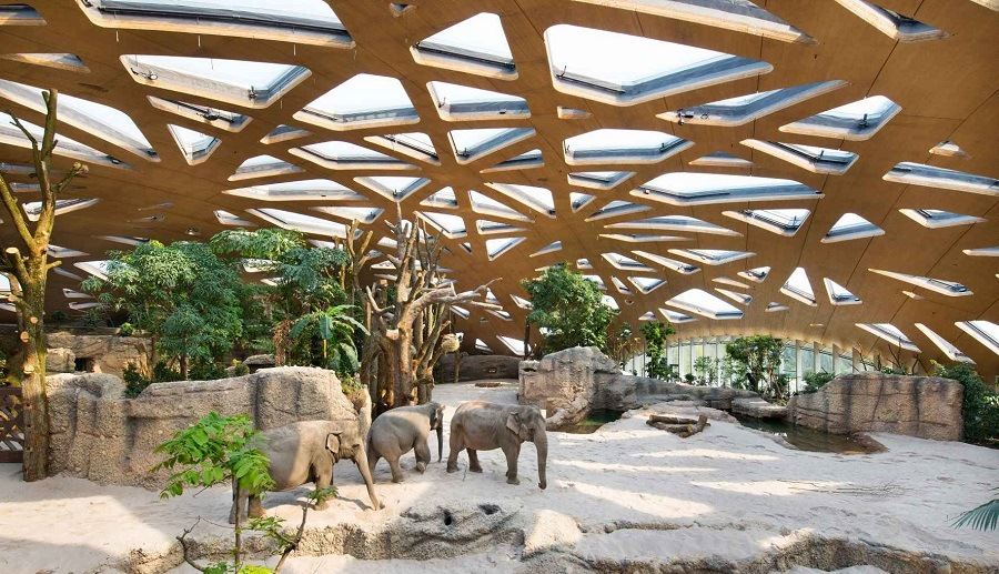 цюрих зоопарк